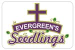 evergreenseedlings